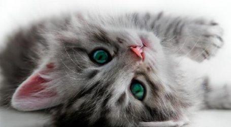 Danger: des insecticides tueraient vos chat et poisson préférés!