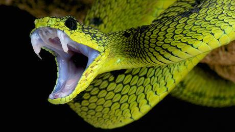 serpent 4 octobre 2016