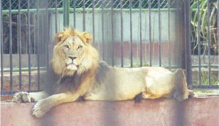 Loisirs : le zoo Ain Sbaa livré dans un an!