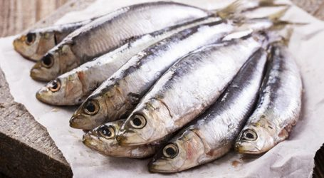 Ramadan : la sardine en vedette!