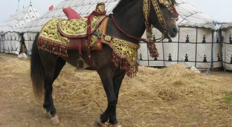 LA SOREC LANCE LA 1ERE ÉDITION DU MEETING NATIONAL DU CHEVAL BARBE & ARABE-BARBE