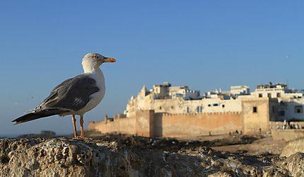 Aérien : la RAM relie Essaouira à Casablanca pour 400 DHS!