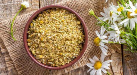 Food-Santé: la camomille et ses multiples bienfaits