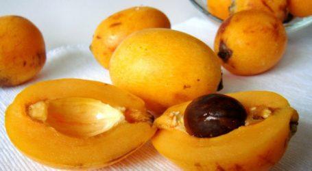 Nèfle, un anti-fatigue naturel