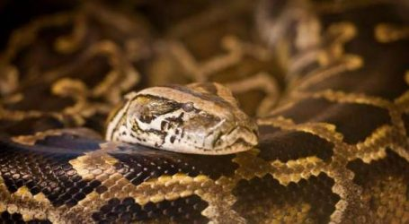 Crocoparc Agadir: la famille des reptiles s'agrandit