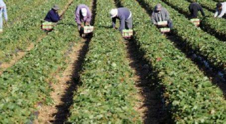 Emploi: hémorragie dans l'agriculture à fin mars