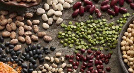 Les professionnels des Céréales et Légumineuses en conclave à Berrechid