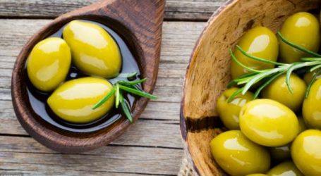 Zoom sur l'olive : Zaytun